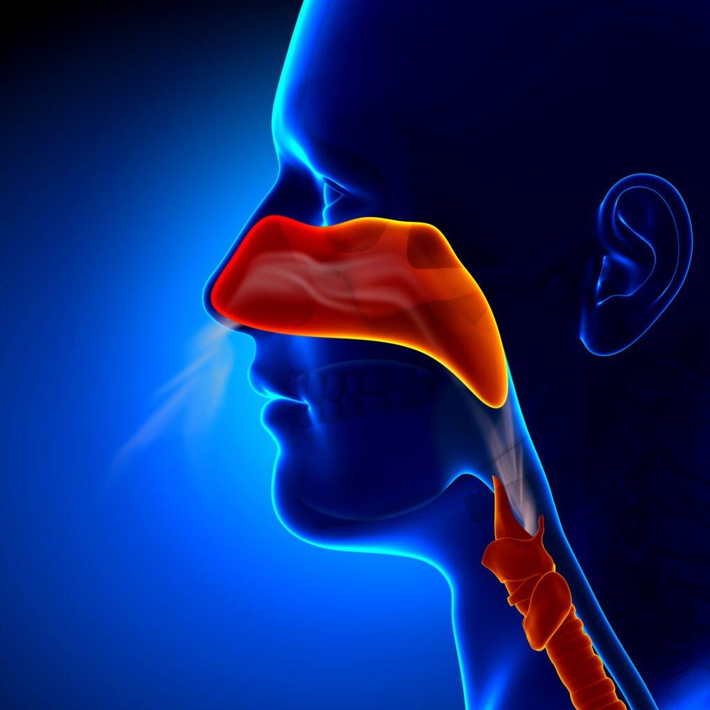 nasal obstructions